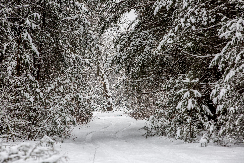 Viską aprėpiantis žiemos baltumas itin traukia akį. Tykiuose Dzūkijos kaimuose nutūpusi žiema – savitai romantiška. Storas sniego kilimas užkloja trobesių stogus, nuo laiko pavargusias tvoras, tiltus ir pakelės kryžių. Nemenka sniego našta tenka medžių šakoms, svyrančioms net iki žemės. Sniego pataluose maudose ir pievos bei vos vos praminti takai.