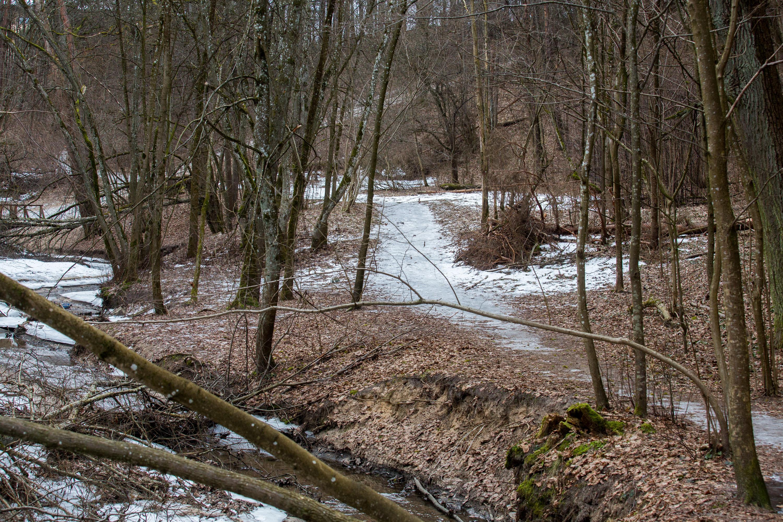 """Norint bent trumpam ištrūkti į gamtą, visai nebūtina lėkti labai toli nuo Vilniaus. Kone 7 km besitęsiantis ir pasivaikščiojimui puikiai tinkantis Kryžiaus kelias – pačioje sostinėje. Takas įsitaisęs netoli Žirmūnų ir Jeruzalės mikrorajonų, vingiuoja palei Nerį ir Kalvarijų gatvę. Didžiąją dalį pažintinis kelias driekiasi mišku, atsiveria vaizdingi reginiai ir """"sutinkamas"""" tiltas per Kedrono upelį. Nors miške dar matyti žiemos ženklų, lengvo pavasario kvapo negali nejusti."""