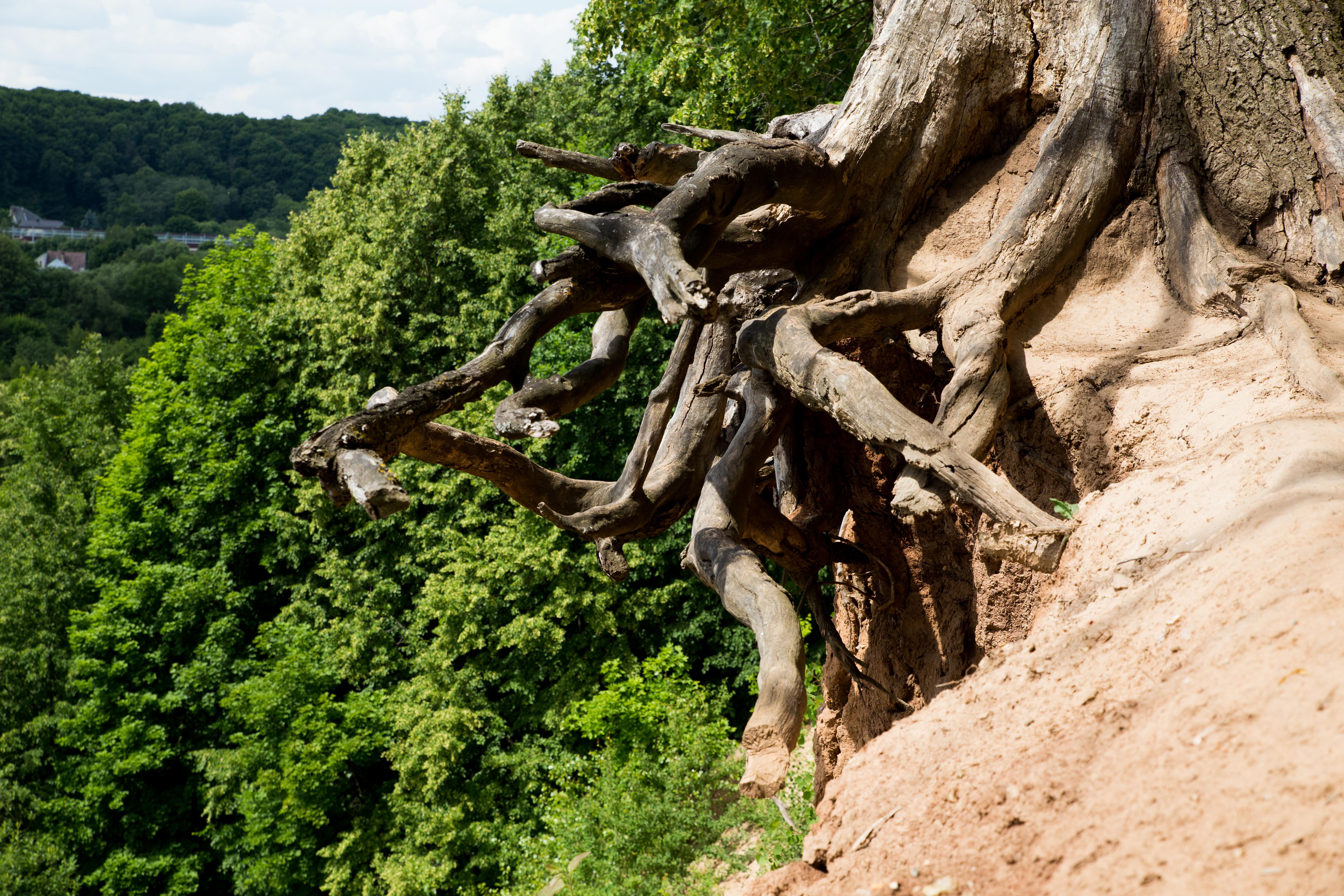 Net ir daliai kauniečių tikriausiai nežinoma, kad miesto pietinėje dalyje esančiame Jiesios draustinyje yra nuostabi gamtos pažinimo ir pasivaikščiojimo vieta. Kviečiame pasigrožėti vaizdais foto galerijoje, o esant galimybei – apsilankyti bei savo akimis jį pamatyti. <strong>Jiesios kraštovaizdžio draustinis</strong> <ul> <li>Jiesios kraštovaizdžio draustinis – saugoma teritorija Kauno rajone ir Kauno miesto pietinėje dalyje. Draustinis apima Jiesios upės žemupio slėnį. Plotas 410 ha (iš jų 176 ha priklauso Kauno miestui).</li> <li>Draustinyje saugomos vaizdžios Jiesios pakrančių atodangos, atveriančios kreidos ir kvartero periodo uolienas, taip pat eroziniai šlaitai ir krantai. Į draustinio teritoriją patenka ir Napoleono kalnas, stūksantis šalia Jiesios ir Nemuno santakos.</li> <li>Jiesios pažintinis takas (apie 2 km) yra nutiestas Jiesios kraštovaizdžio draustinyje.</li> <li>Draustinio teritorijoje auga reti ir saugomi augalai – gebenė lipikė, tuščiaviduris rūtenis, tarpinis rūtenis, klumpaitė, lieknoji plukė, mažoji vištapienė, plačialapė gegūnė, didysis asiūklis, žirnialapis vikis, didžioji dantenė, didysis putelis, gležnalapė nertis, gegužraibė, kompasinė salota, raudonžiedis žalčialunkis, paprastasis sausažiedis, paprastasis burbulis, mėlynasis palemonas ir kt.</li> <li>Slėnyje gyvena reta vabzdžių rūšis – kalninė apsiuva, yra elniaragių, puošniažygių, juodųjų apolonų, kalninių cikadų. Gyvena apie 50 paukščių rūšių, yra šikšnosparnių, žalčių, kiaunių, lazdyninių miegapelių, stirnų, šernų.</li> </ul>