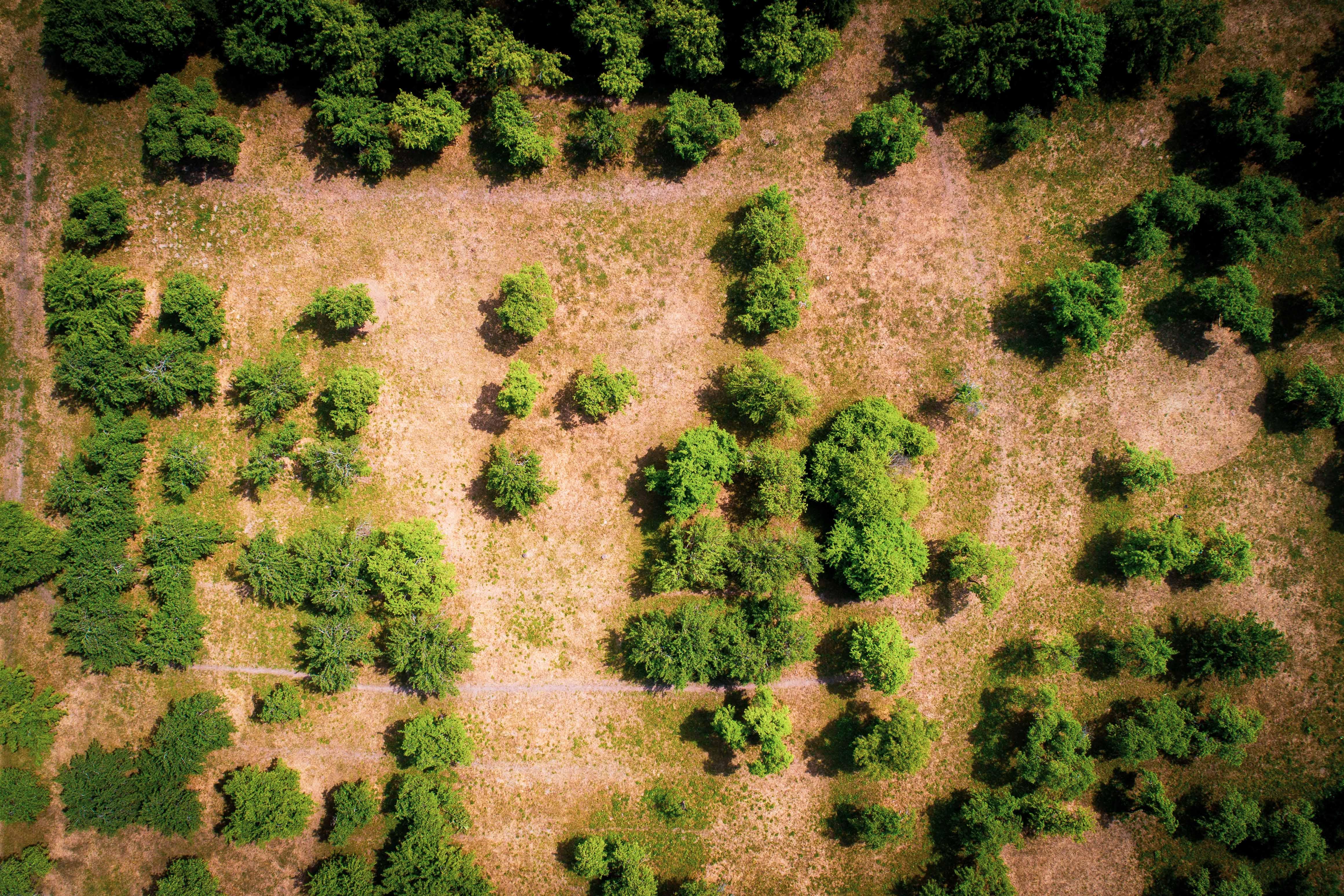 """Metereologai teigia, kad stichinė sausra aktyviosios augalų vegetacijos laikotarpiu alina 6 savivaldybes. Sausringas laikotarpis tęsiasi jau 27 savivaldybių teritorijose. Kaip sako S. Paltanavičius - <a href=""""https://www.15min.lt/naujiena/aktualu/orai/s-paltanavicius-dabar-padeti-pakeis-tik-lietus-60-987928"""">Mums reikia laukti lietaus. Jo tikrai bus. Juk čia pat Joninės, o jos Lietuvoje retai kada būna be lietaus!</a> Galerijoje galite pamatyti kaip atrodo sausros alinamas Vilnius ir jo apylinkės. Vakar <i>15min</i> studijoje viešėjęs klimatologas dr. Donatas Valiukas teigė, kad tokie anomalūs reiškiniai dėl klimato kaitos tik dažnės. Visą pokalbį su specialistu apie tokių karštų ir sausringų orų priežastis, apie tai, kokių dar neįprastų orų tikėtis šią vasarą ir kokių pasekmių jie gali turėti mums ir mūsų gamtai, galite pamatyti – <a href=""""https://www.15min.lt/gyvenimas/video/15min-studijoje-klimatologo-izvalgos-ko-tiketis-is-neiprastu-sios-vasaros-oru-139670"""">čia</a>."""
