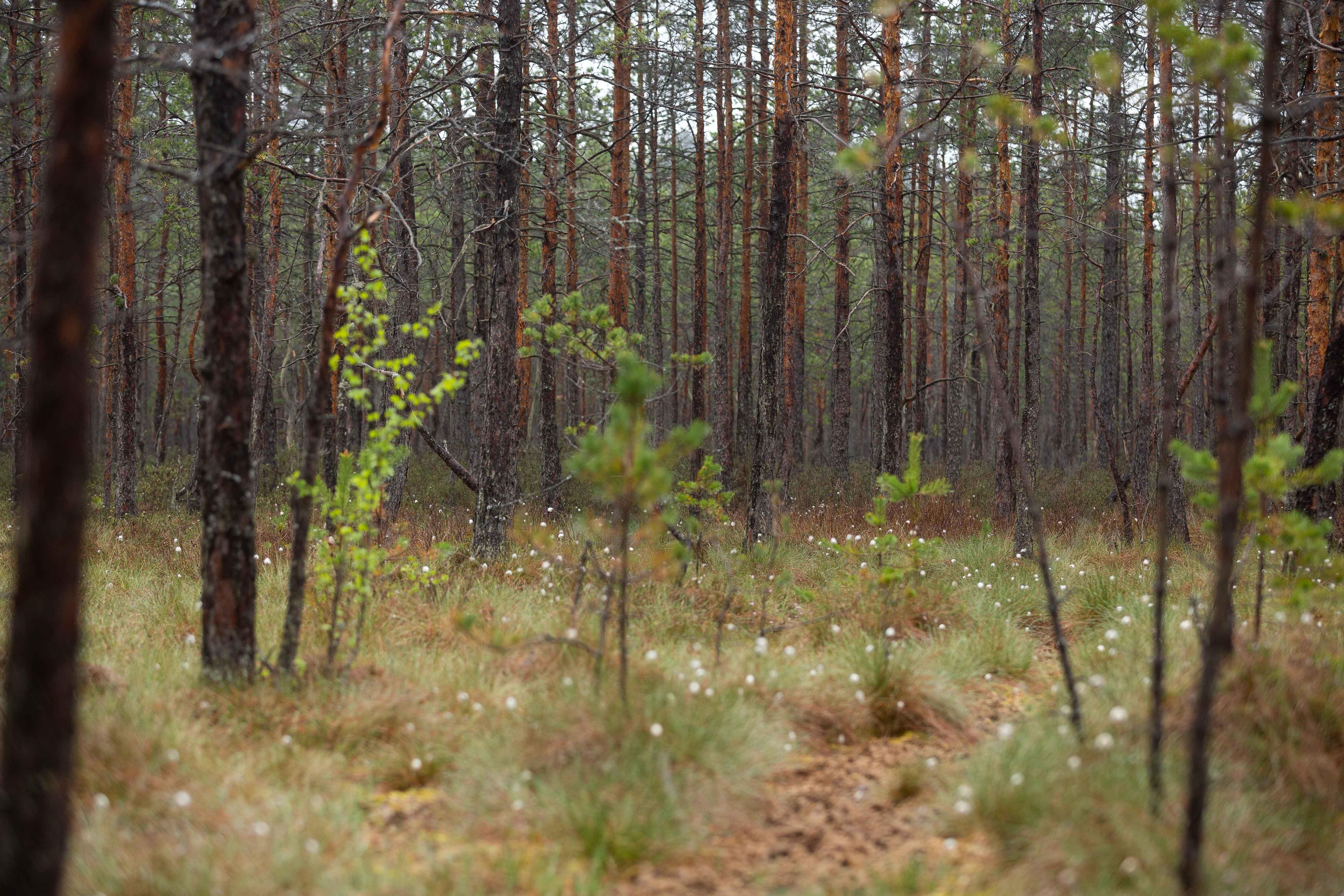 Tokia nedidukė Lietuva skirstoma į keturis regionus. O linksmieji dzūkai vieni kitus dar skirsto į šilo dzūkus (kuriuos maitino miškas), panemunės dzūkus (kuriuos maitino Nemunas, Merkys ir sielininkų veikla) ir įprastus – tuos, kurie užsiėmė žemdirbyste. Dzūkijos nacionalinis parkas vadinamas upių ir upelių regionu – čia stebina ne tik įspūdinga gamta, tačiau ir šimtmečius čia gyvenusių nenuoramų žmonių istorijos. <strong> </strong>