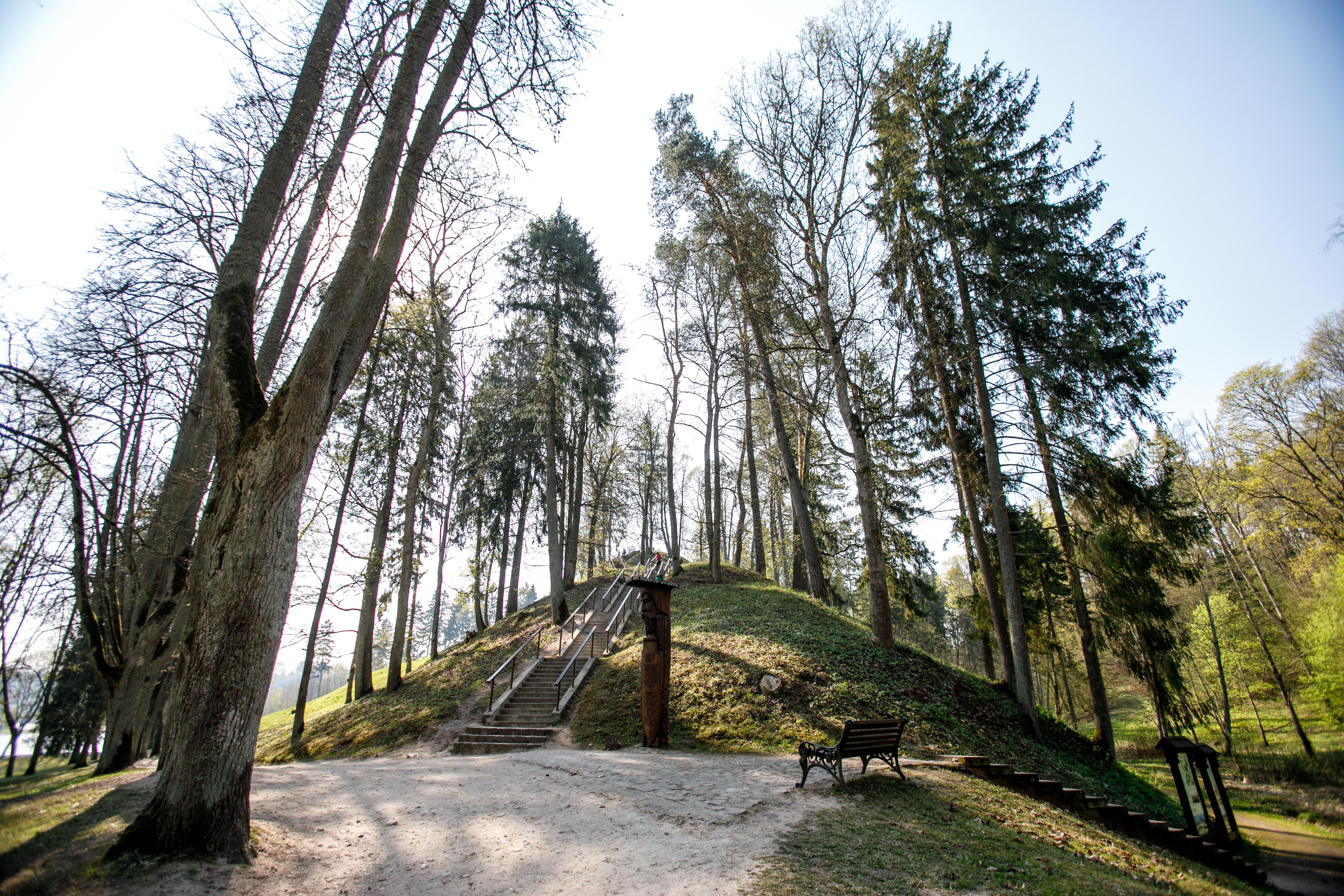 Nemuno kilpų regioninis parkas jau šią vasarą atidarys naują apžvalgos bokštą, kuris, tikėtina, pakartos Anykščių medžių lajų tako populiarumą. Nuo aukščiausio Lietuvoje apžvalgos bokšto lankytojai pagaliau galės išvysti, kaip šioje vietoje rangosi galingasis Nemunas. Iki šiol peizažų mylėtojai kopdavo į Balbieriškio atodangą, Birštono ir Punios piliakalnius. Šiame parke taip pat gausu pažintinių takų, jau į horizontalią padėtį atsigulusių ir vis dar išdidžiai stovinčių šimtamečių medžių-galiūnų.