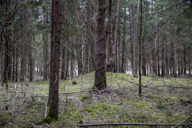 """Vienuose parkuose auga reti augalai, kitur – šmirinėja rečiausi, tik gamtininkų pastebimi ir atrandami vabalai arba didžiąją metų dalį pramiegančios miegapelės. O Sirvėtos regioniniame parke gyvena... 17 senųjų Lietuvos dievybių. Šio parko išskirtinumas – mitologija ir sakralios vietos, iki šiol išlaikę """"šventų"""" pavadinimus bei apipintos iš kartos į kartą, iš lūpų į lūpas perduodamomis legendomis. Jas mums atskleidė šio parko kraštotvarkininkas Marius Semaška."""