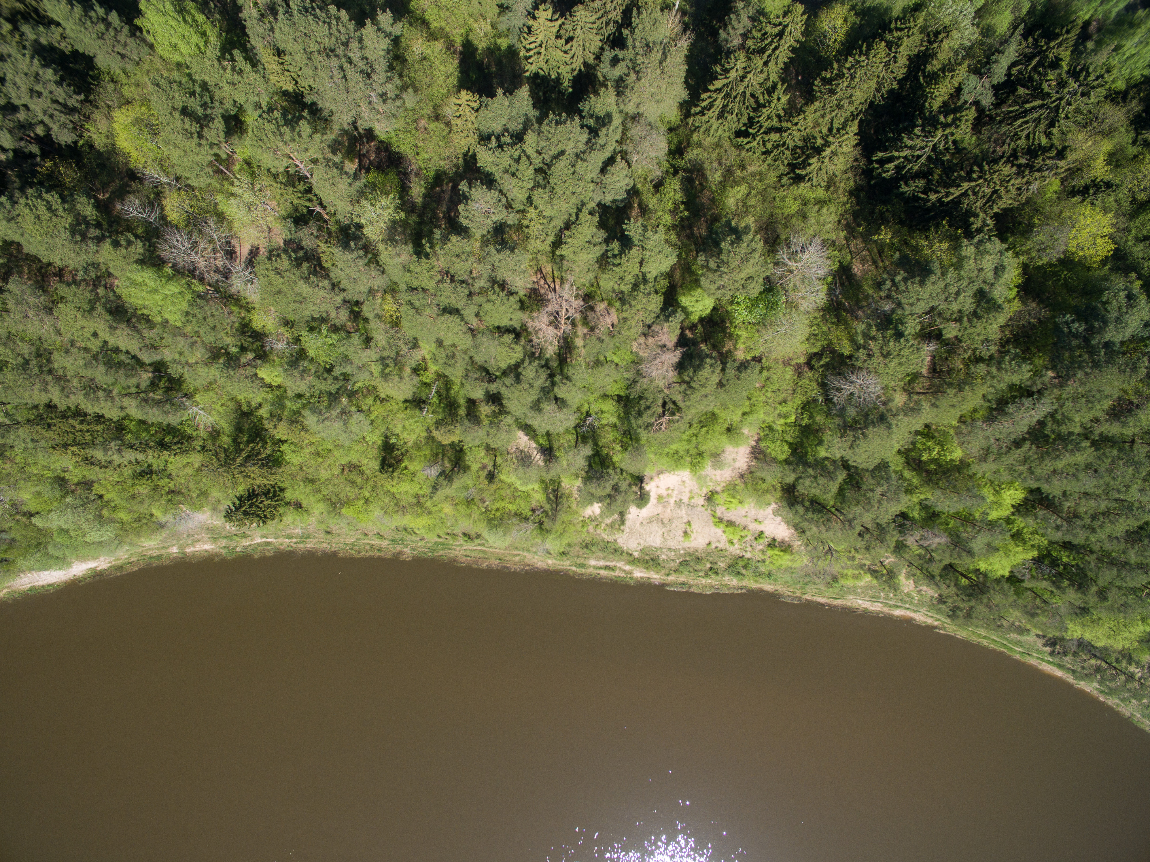"""Ar esate atkreipę dėmesį, kad visus 900 kilometrų tekantis aiškia kryptimi upių """"tėvas"""" Nemunas ties Prienais, Birštonu pradeda raitytis, vingiuoti, ir, apsukęs kilpą, sugrįžti atgal, lyg norėtų kažko baisaus išvengti. Senovėję plaukusiems šia upe tokie vingiai keldavo nerimą: iš abiejų pusių – neįžengiami miškai, priekyje – besiraitanti upė – kažin kas gali nutikti tokioje atkarpoje? Dabar šioje vietoje, ties Prienais, Birštonu, įkurtas Nemuno kilpų regioninis parkas, viliojantis daugybe vietų akims paganyti. Įvairiems sparnuotiems ir po šimtamečius medžius ropojantiems gyventojams Nemuno kilpų ir šalia ošiančio Punios šilo gamtinės sąlygos sukuria vienintelę galimybę gyventi Lietuvoje."""
