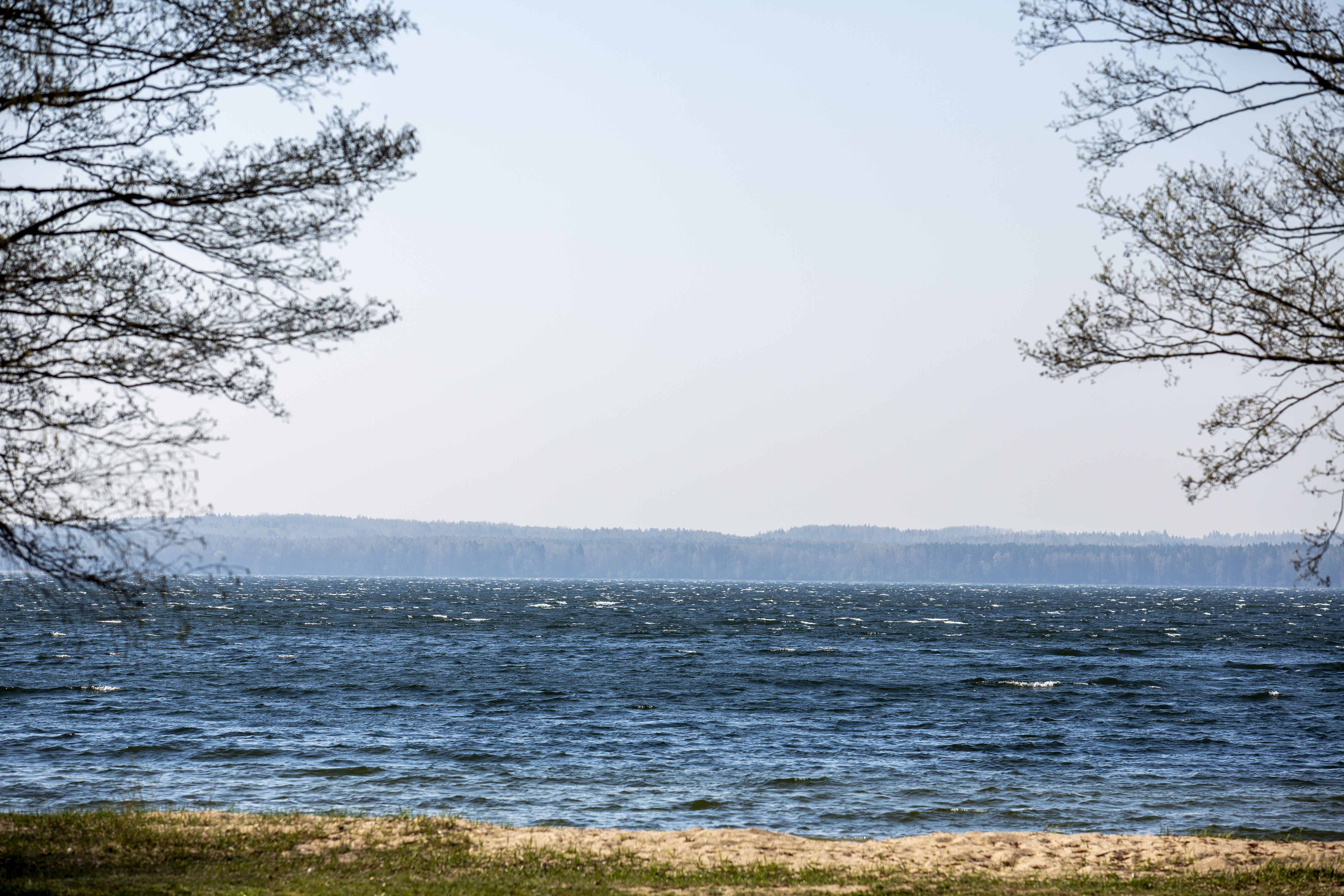 """Kai kurias brangiausias savo šalies gamtos vertybes turime dalintis su kaimynais. Ir tai ne tik Baltijos jūra, Kuršių nerija, tačiau ir Vištyčio ežeras, vienas seniausių šalies ežerų, po kurio gelmes nardo """"reliktinės"""" ledynmečio žuvys, o krantus supa ledyno sustumtos kalvos. Kartu su Vištyčio regioninio parko ekologu Vaidu Leonavičiumi apžvelgiame, kokias gamtos vertybes saugo šis regioninis parkas."""